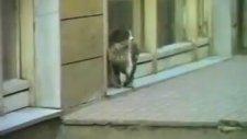 Çöpçüler Kralı Kedi Kovalama