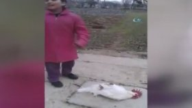 Ölü Taklidi Yapıp Tavuk Görünce Canlanan Horoz