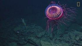 Görüntüsüyle Büyüleyen Denizanası