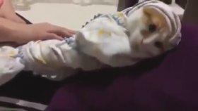 Bebek Gibi uyutulan Kedi