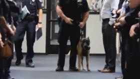 Polis Köpeğinin Emekli Olması