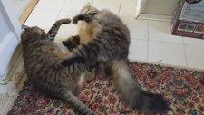 Şişman Kedi Kavgası