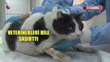 Türkiye'nin En Şişman Kedisi Tombalak