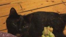 Sebze Yemeğinden Tiksinen Kedi