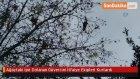 Ağaçtaki İpe Dolanan Güvercini İtfaiye Ekipleri Kurtardı