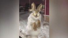 -56 Derece Soğukluğa Dayamayıp Taş Kesilen Hayvanlar