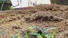 Karıncaların Evi Nerede? (Çocuk Belgeseli)