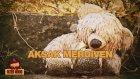 Alter Mood - Aksak Merdiven (Free Beat)