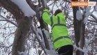 Ağaçta Mahsur Kalan Kediyi Fabrika Çalışanları Kurtardı