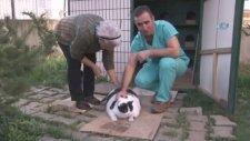 18 Kiloluk Kedi Tombalak'ı Zayıflatmak İçin Seferber Oldular