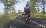 Bisiklet Süren Adamı Yerle Bir Eden Kanguru