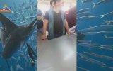 Mavişehir Balık Mezatı Zargana İçerir