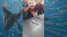 Mavişehir Balık Mezatı (Zargana İçerir)