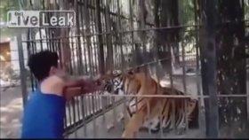 Hayvanat Bahçesinde Kolunu Kaplana Kaptıran Dikkatsiz Ziyaretçi