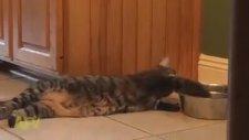 Kaptaki Suyu Sindire Sindire İçen Kedi