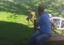 Kilo Veren Sahibini Kokusundan Tanıyan Köpek