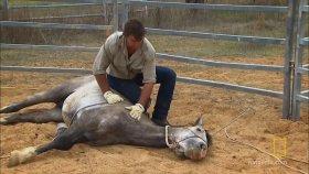 Vahşi Atları Ehlileştirip Kuzuya Çeviren Adam