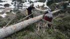 Zorlu Orman İşçiliği