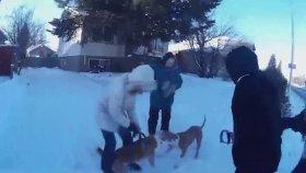 Köpeğe Saldırıp Yaralayan Vahşi Pitbull