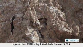 Örümcek Kuyruklu Boynuzlu Yılanın Sinsi Tuzağı