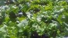 Hobi bahcemizdeki bitkiler hakkında bilgiler