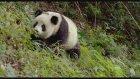 Pandas (2018) Fragman