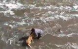 Temizlik İşçisinin Dereye Düşen Köpeği Kurtarması