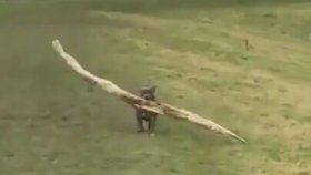 Uçmaya Çalışan Köpek