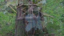 Dünyanın En İyi Ağaç Evleri Ahşap Evleri