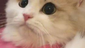 Sevimlilikte Sınır Tanımayan Uslu Kedi
