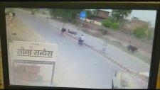Hindistan'da Boğa Motosiklete Saldırdı