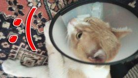 Kedim Hasta Oldu :(
