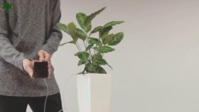 Telefonunuzu Topraktan Bitkiler Sayesinde Şarj Etmek İster Misiniz?