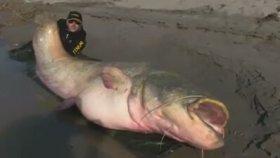 Dünyanın En Büyük Yayın Balığı