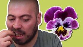 Yenilebilir Çiçekleri Yedik (Menekşe, Mor Viyola, Kabak Çiçeği)