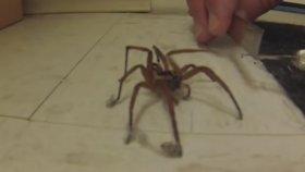 Bir Örümceğe Yardım Etmek