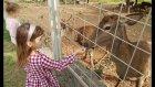 Elif Melisa İle Hayvanat Bahçesinde Geziyor. Eğlenceli Çocuk Videosu