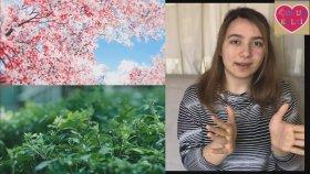 Mevsimleri Öğrenelim,eğitici Çocuk Videoları