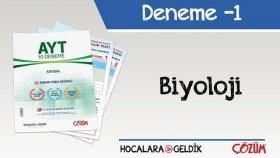 10'li AYT Denemesi -1 / Biyoloji
