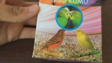 Muhabbet Kuşlarına Verilen Vitaminler Ve İlaçlar