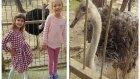 Elif ve Melisa Hayvanat Bahçesinde Gezintiye Devam Ediyor. Ayılar, Aslanlar, Kaplanlar, Eğlenceli
