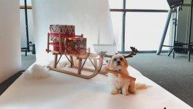 Fotomodel Köpeğin Sevimliliği