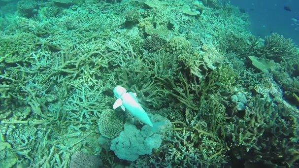 İnceleme Amaçlı Gerçeğine Yakın Robot Balık Geliştirildi
