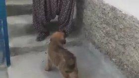 Köpekle Karşılaşan Teyzenin Muhteşem Tepkisi