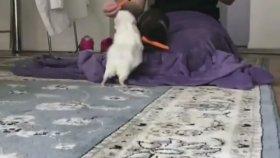 Sırasını Bilen Tavşanlar