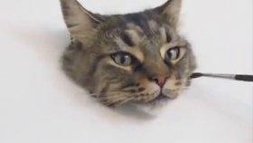 Aşırı Gerçekçi Kedi Çizimi