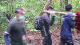 Endonezya'da Kafesteki Orangutanlar Kurtarılması
