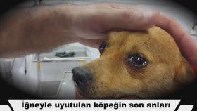 İğneyle Uyutulacağını Anlayan Köpeğin Gözyaşları :(