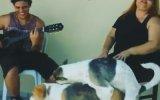 Romantik Şarkıyla Kendini Kaybeden Köpek