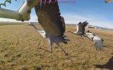 Göç Eden Kuşlarla Birlike Uçmak